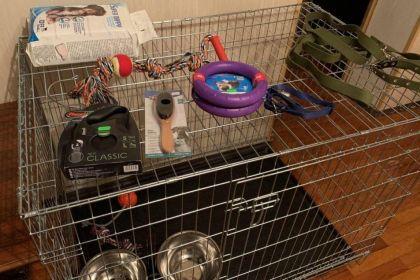 Перечень необходимых покупок для щенка