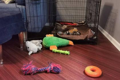 Приучение щенка амстаффа к своему месту (клетка)