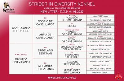 Щенок № 32 Winner Strider in Diversity
