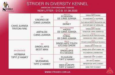 Щенок № 30 William Strider in Diversity